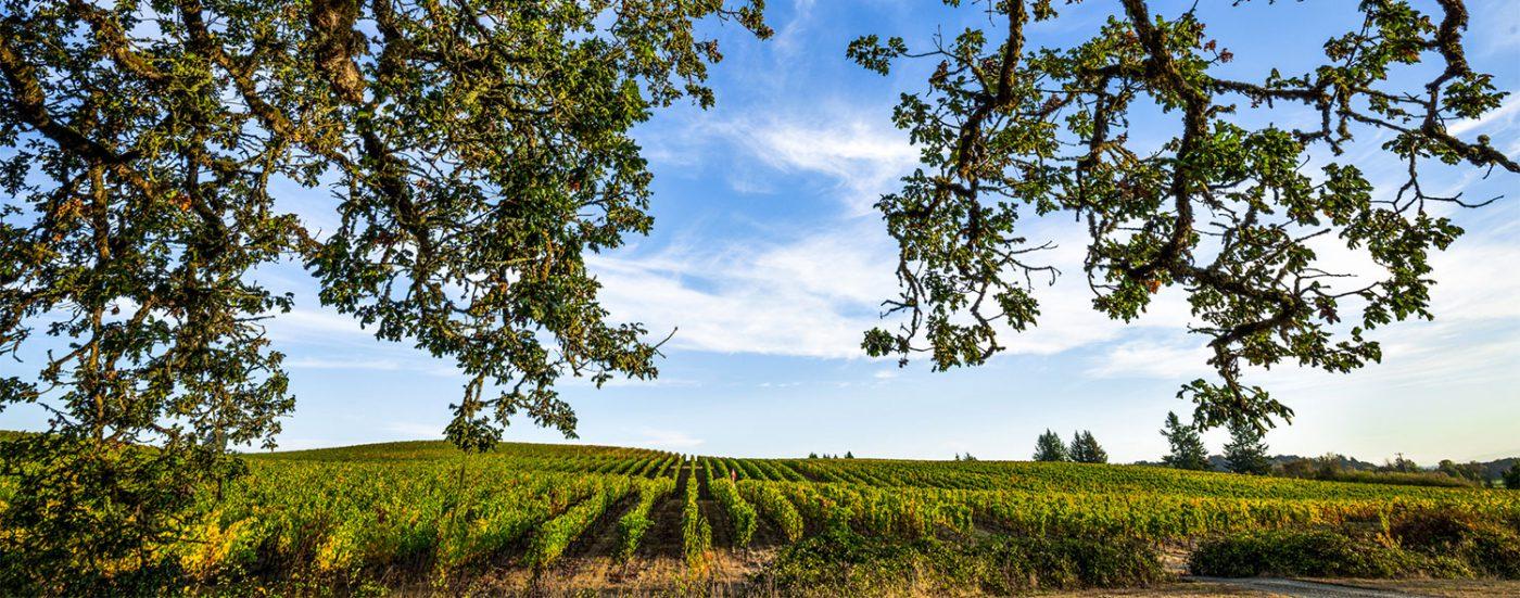Benton-Lane Vineyards
